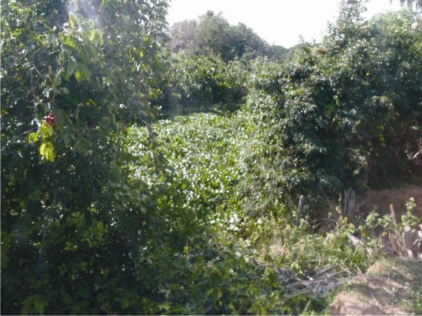 Além da desobstrução da boca do rio o AHINOR vai limpar o mato para que as águas fluam com normalidade.